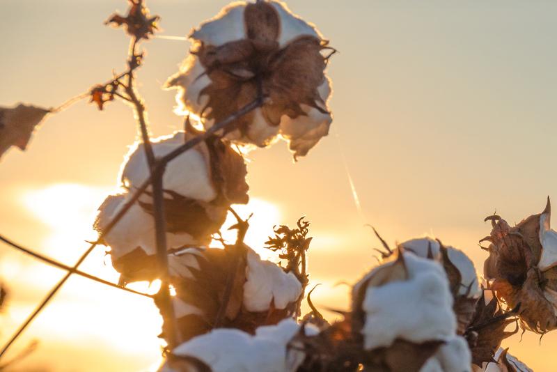 Are Supima Cotton Sheets Durable