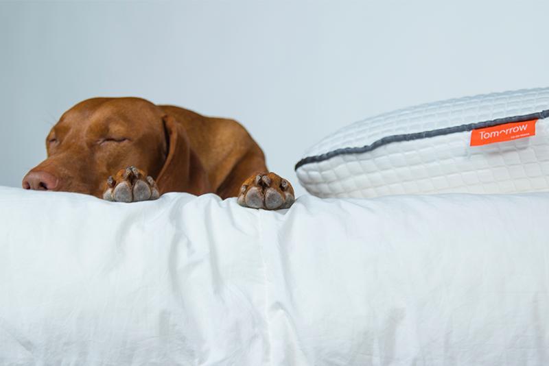 Tomorrow Sleep Mattress For Back Sleepers